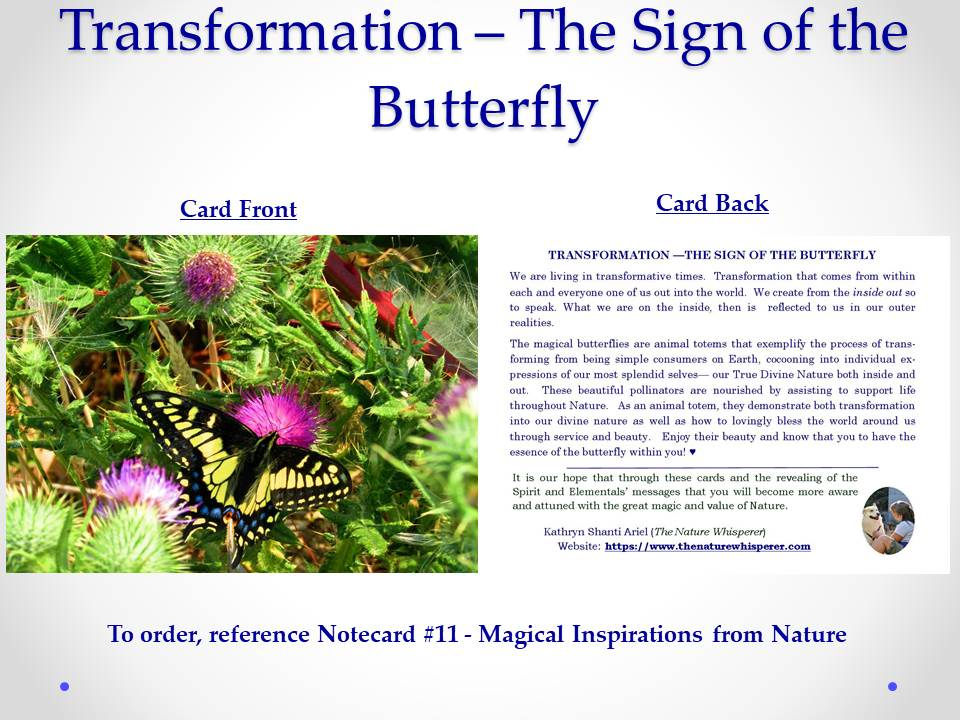 Transformation - The Sign of the Butterfly notecard