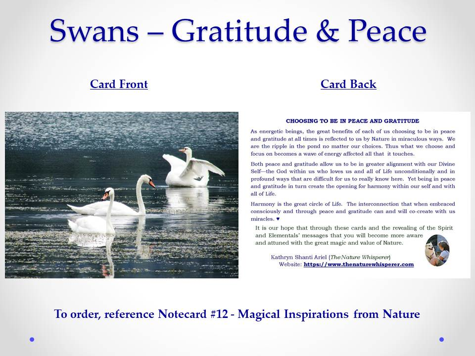 Swans - Gratitude and Peace notecard