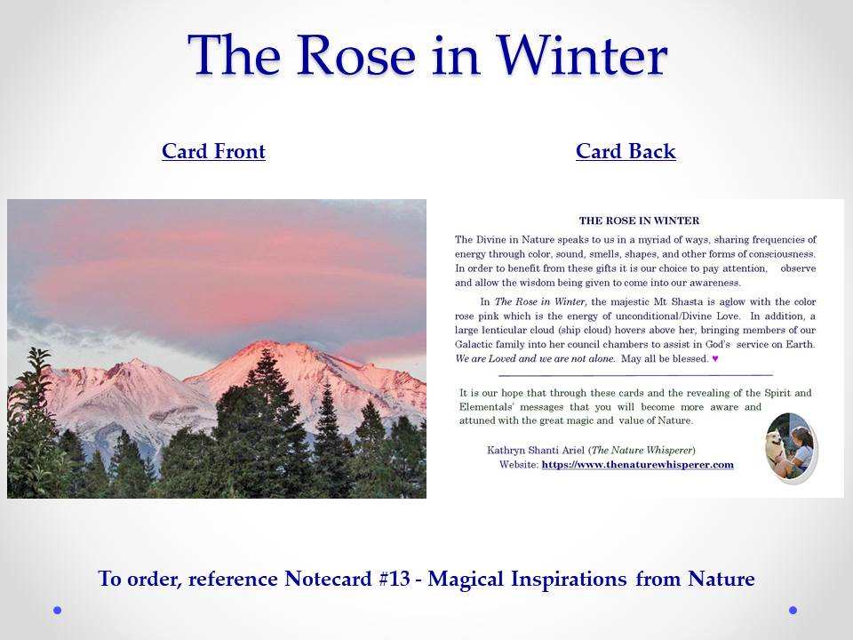 The Rose in Winter (Mt Shasta) notecard