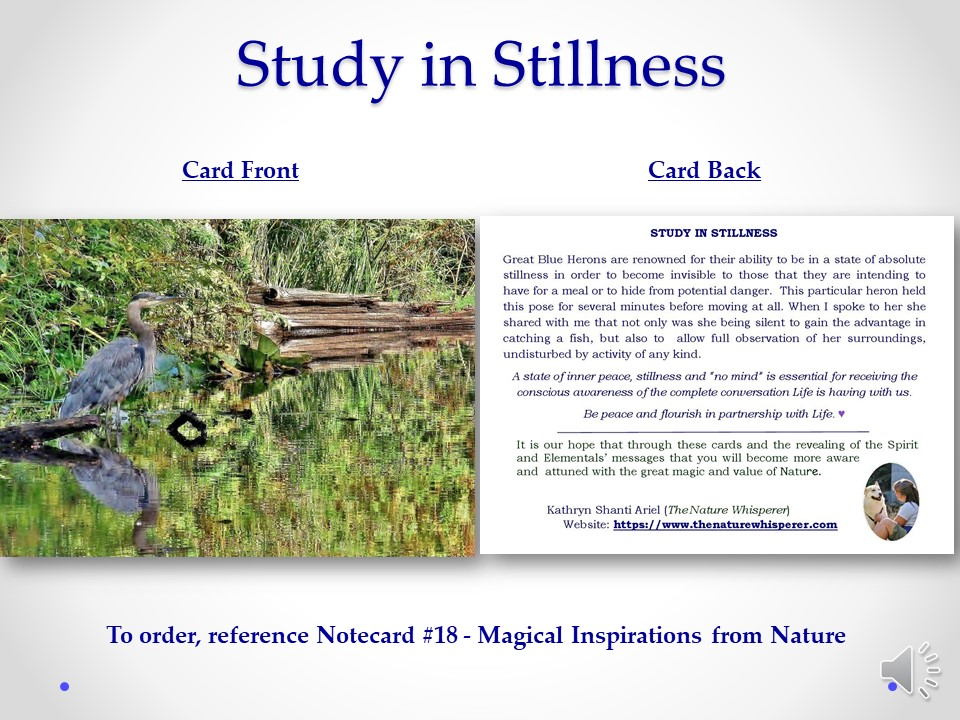 Study in Stillness notecard side by side